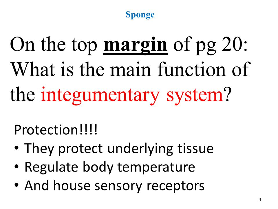 4 Sponge On the top margin of pg 20: What is the main function of the integumentary system.