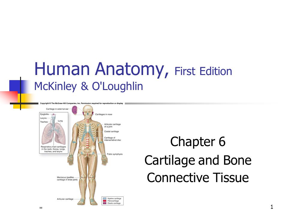 1 Human Anatomy First Edition Mckinley Oloughlin Chapter 6