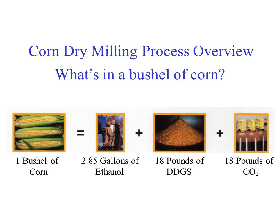 What's in a bushel of corn.