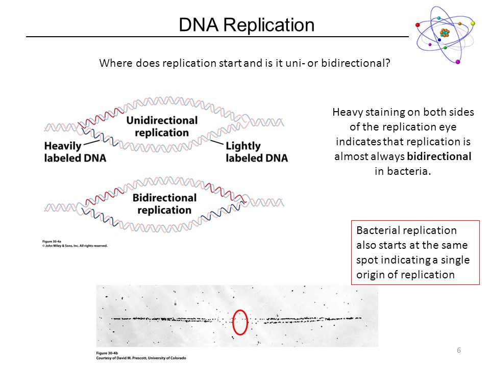 Dna Replication Process Chapter Lecture Ppt Download