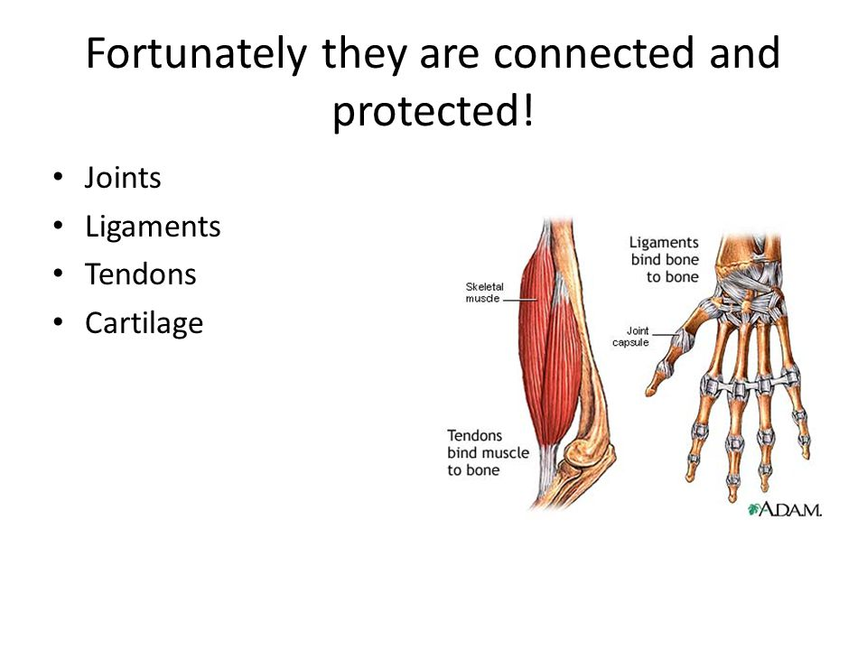 Diagram Of Tendons And Ligaments And Cartilage Residential