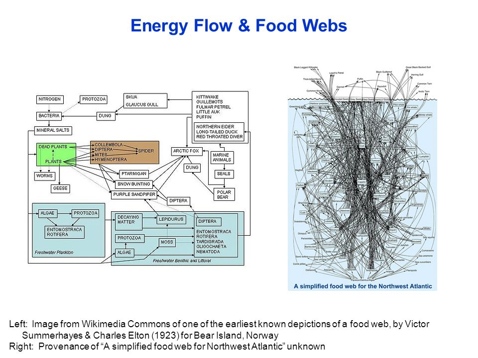 Energy Flow Food Webs Left Image From Wikimedia Commons Of One Of