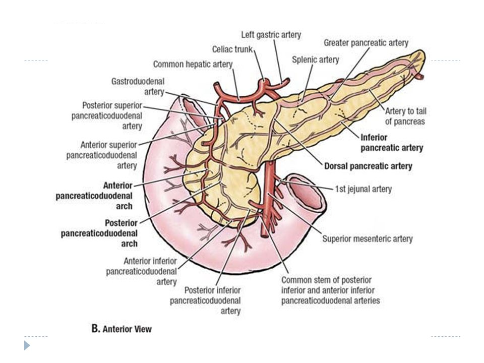 Imaging Anatomy Of The Pancreas Ben Barnard Department Of Diagnostic
