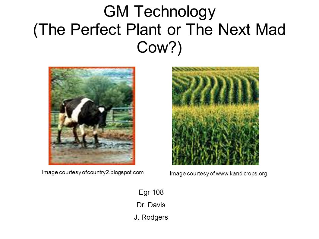 GM Technology (The Perfect Plant or The Next Mad Cow ) Image courtesy ofcountry2.blogspot.com Image courtesy of   Egr 108 Dr.