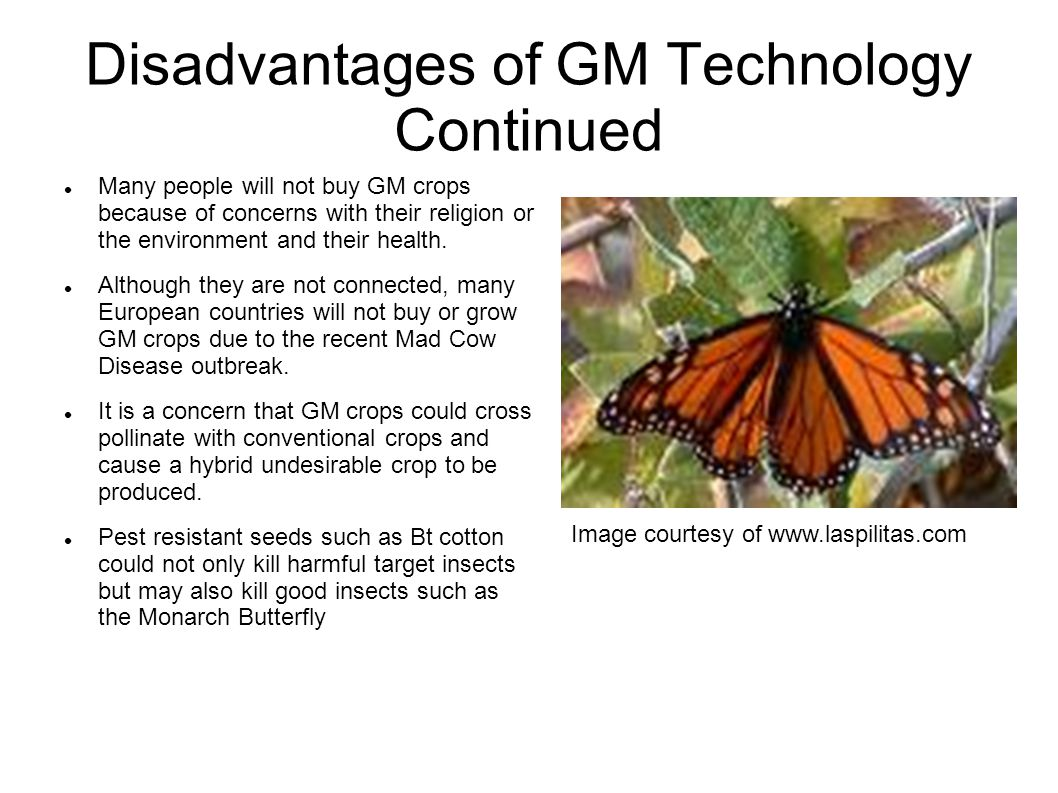 Disadvantages of GM Technology Continued Many people will not buy GM crops because of concerns with their religion or the environment and their health.