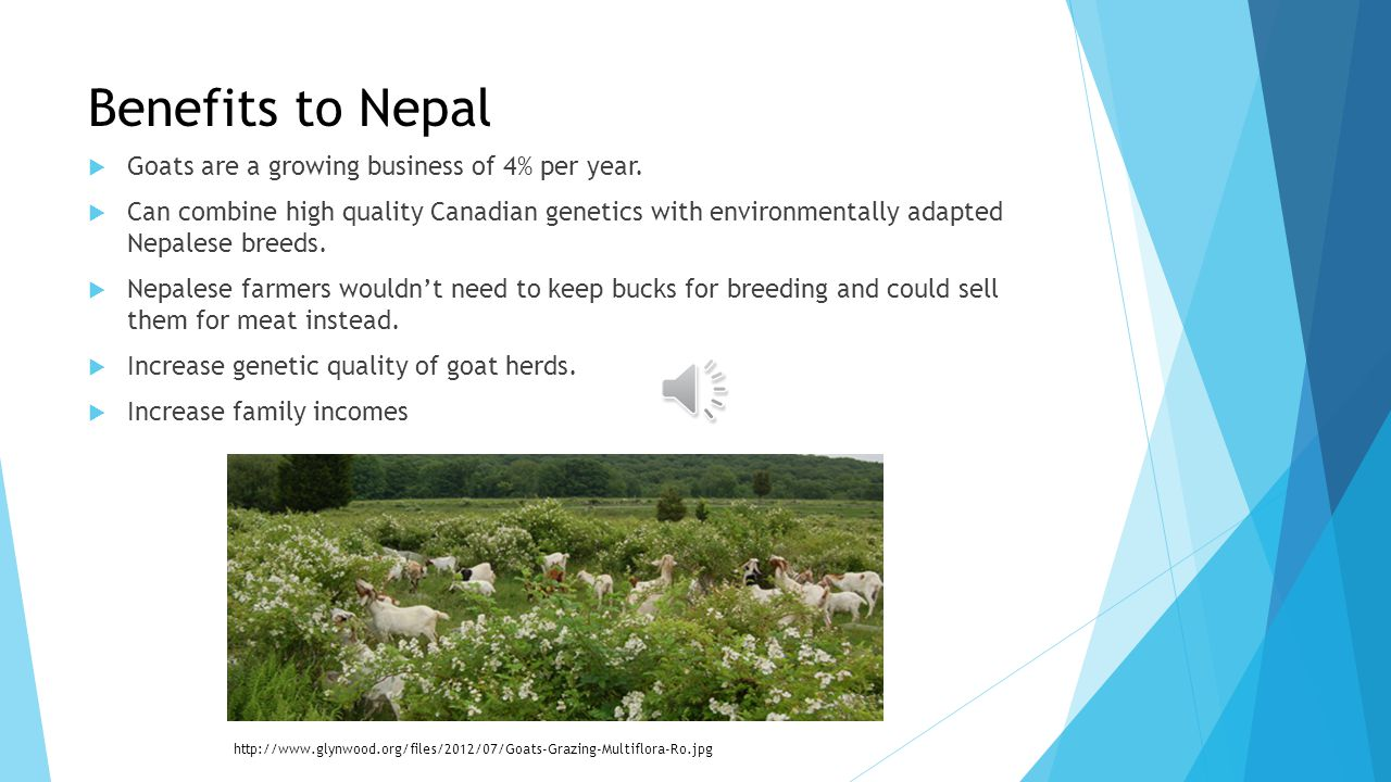 Goat Semen Export to Nepal By: Ben Anderchek University of