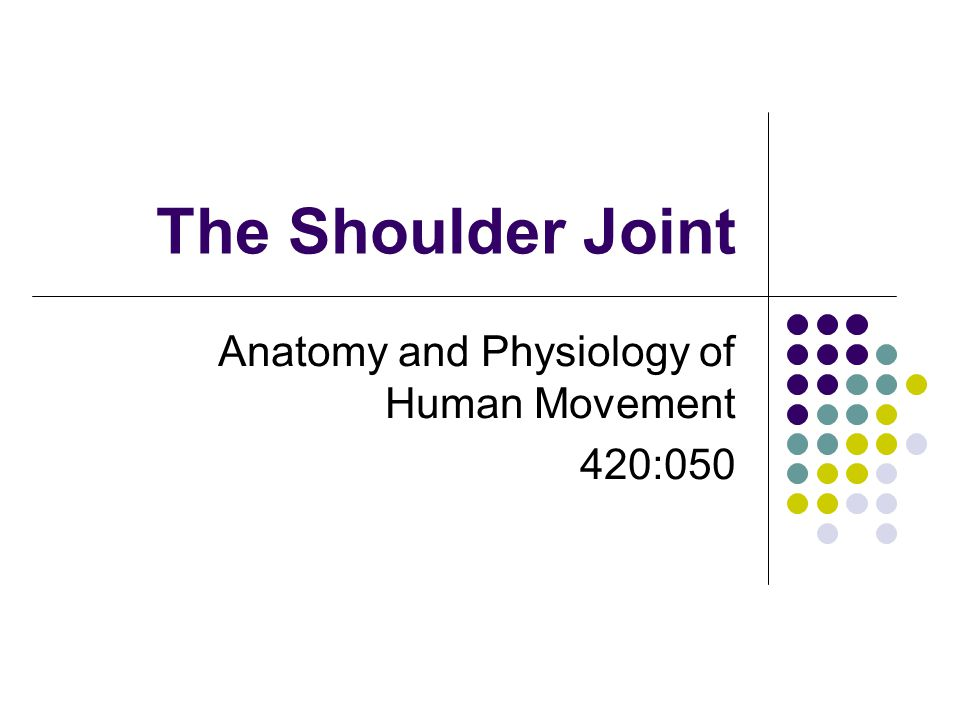 The Shoulder Joint Anatomy And Physiology Of Human Movement 420 Ppt