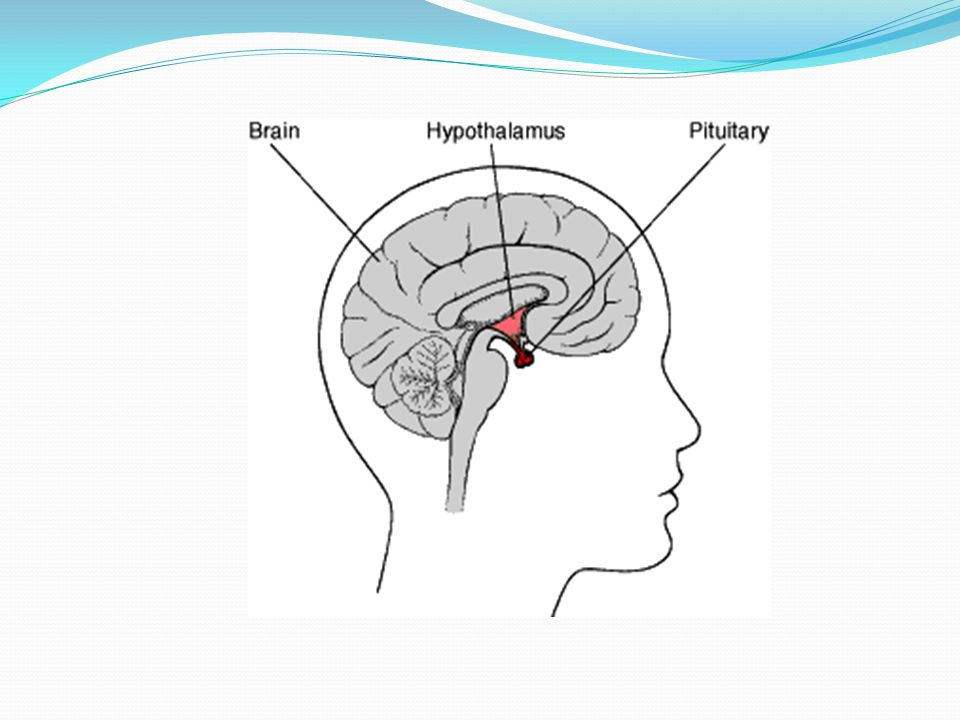 Presentation On Pituitary Gland Ppt Video Online Download