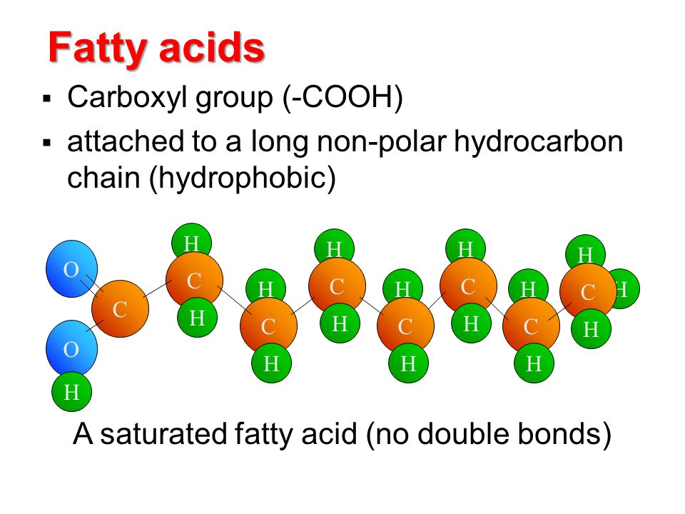 Fatty acids  Carboxyl group (-COOH)  attached to a long non-polar hydrocarbon chain (hydrophobic) H H C H H C H H C H C O O H C H H C H H C H H C H H A saturated fatty acid (no double bonds)