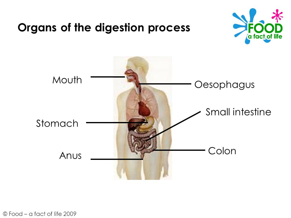 Food A Fact Of Life 2009 The Digestion Process Foundation Ppt
