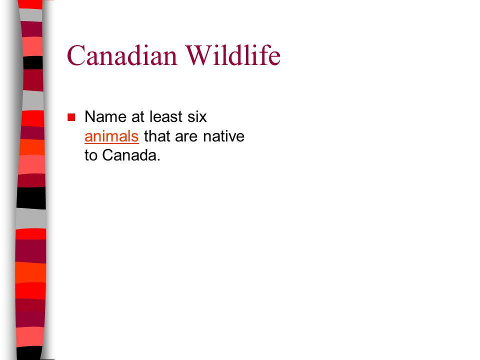 Canadian Wildlife Name at least six animals that are native to Canada. animals