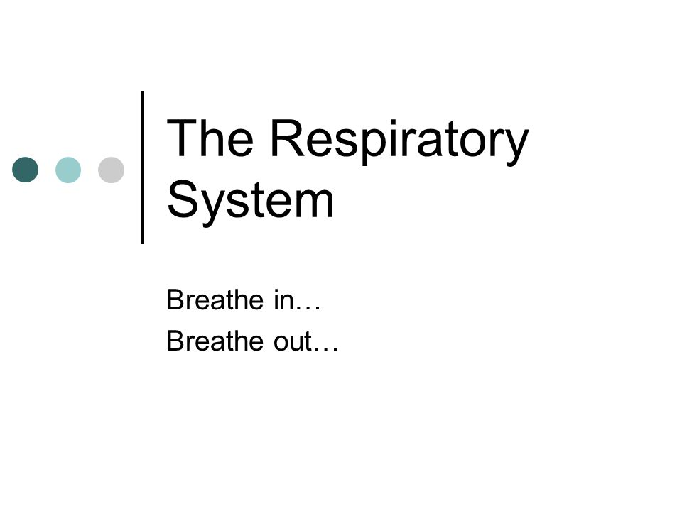 The Respiratory System Breathe in… Breathe out…