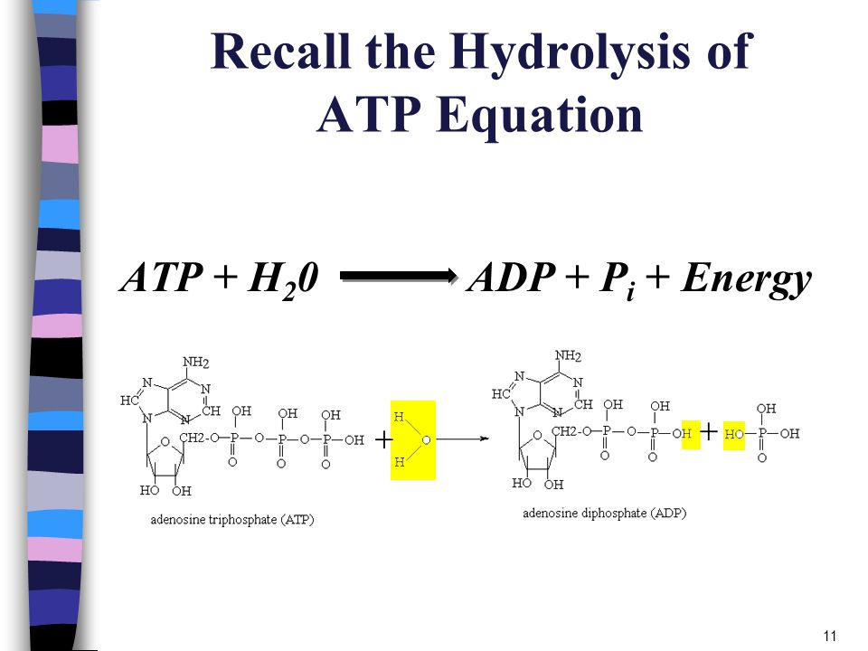 Image result for atp to adp equation
