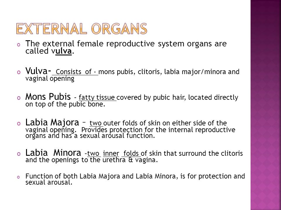 Ms. Kehoe 9 th grade Health. o The external female reproductive ...