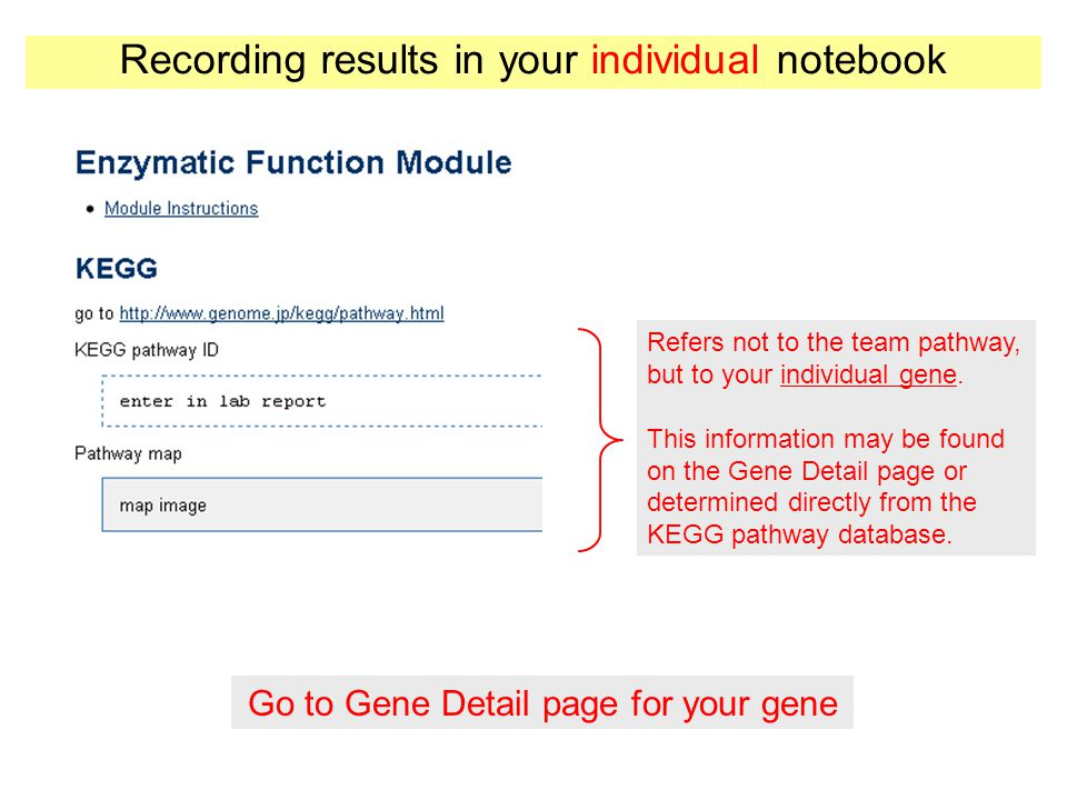 Enzymatic Function Module (KEGG, MetaCyc, and EC Numbers