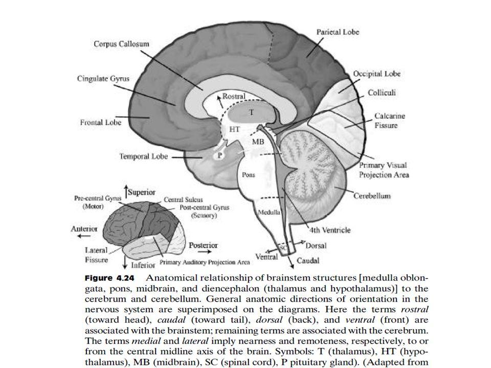 ELECTROENCEPHALOGRAM (EEG) - ppt download