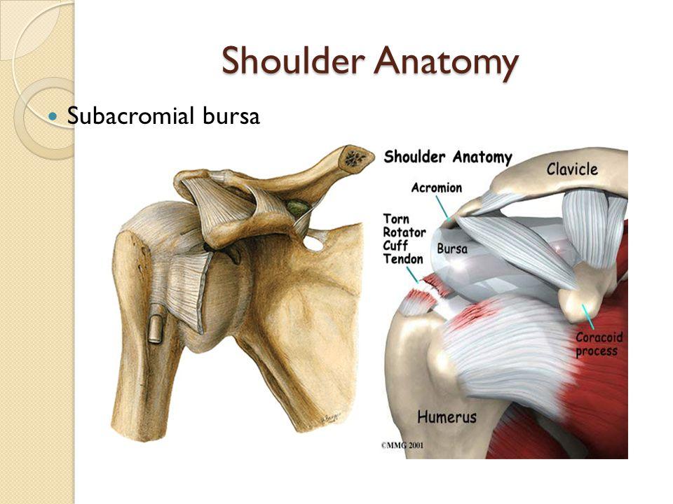 Evaluation Of The Shoulder Shoulder Injury Evaluation Overview