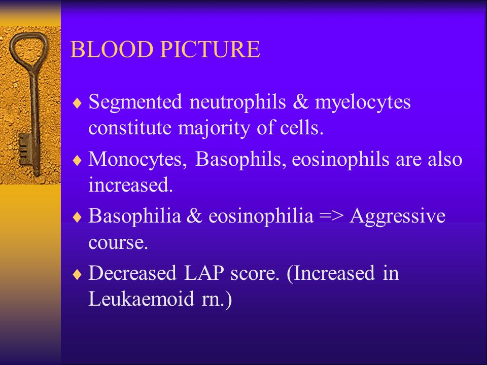 BLOOD PICTURE  Segmented neutrophils & myelocytes constitute majority of cells.