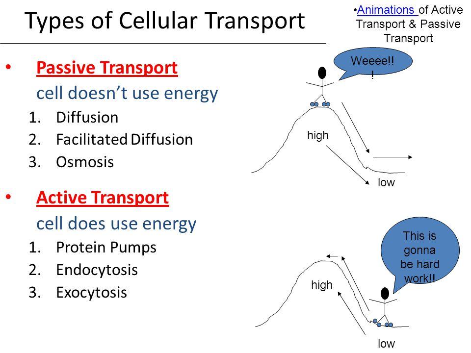 Cellular Transport Types Of Cellular Transport Passive Transport