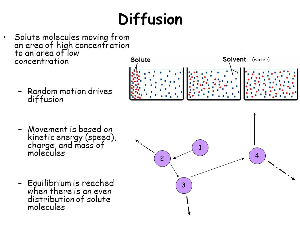 Diffusion Solute molecules moving from an area of high concentration to an area of low concentration –Random motion drives diffusion –Movement is based on kinetic energy (speed), charge, and mass of molecules –Equilibrium is reached when there is an even distribution of solute molecules (water)