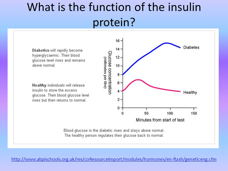 What is the function of the insulin protein.