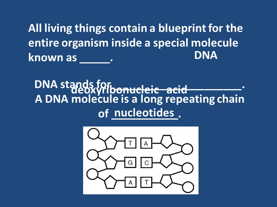 Dna all living things contain a blueprint for the entire organism all living things contain a blueprint for the entire organism inside a special molecule known as malvernweather Choice Image
