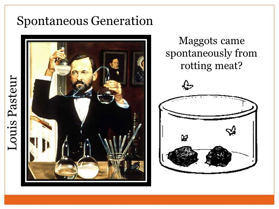 Spontaneous Generation Maggots came spontaneously from rotting meat Louis Pasteur