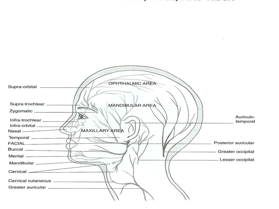 Nerves Head Face Neck Ppt Video Online Download