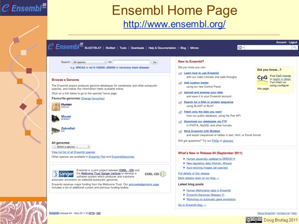 Doug Brutlag 2011 Ensembl Home Page