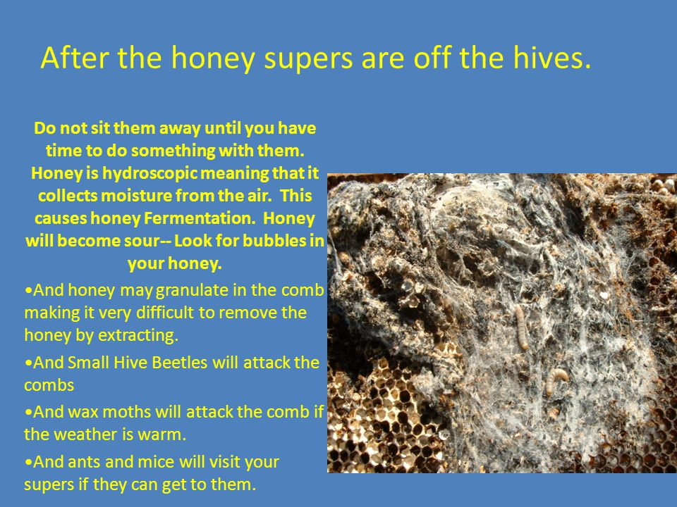 Hive Inspections  Beekeeping Management of of honey bees