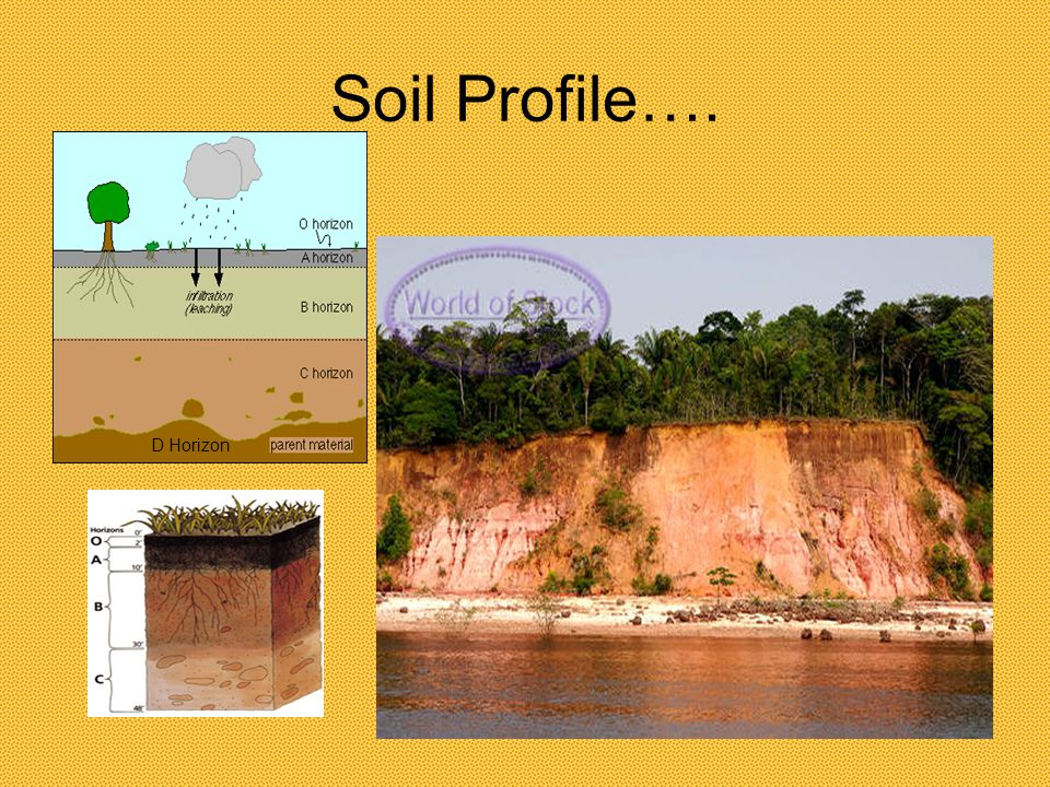 Soil Profile Soil Profiles: A profile is a side view of something… Soil is made up of many layers or horizons The Profile is the different layers between the O horizon and the D (or R) (bedrock) Each horizon is composed of different rock, minerals and vegetation combinations