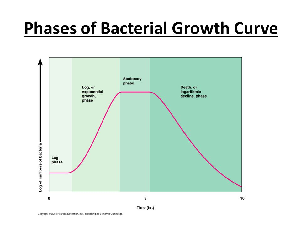 Phases of Bacterial Growth Curve
