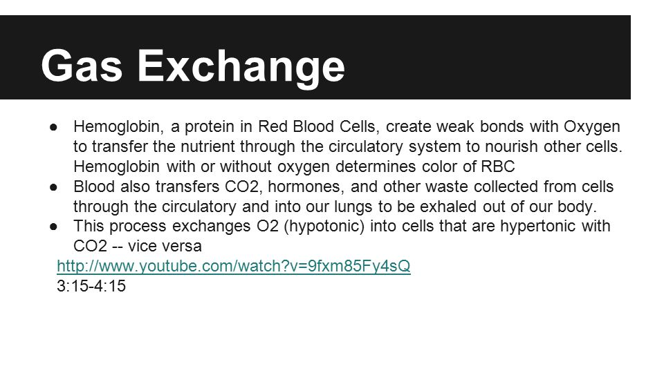 Gas Exchange ●Hemoglobin, a protein in Red Blood Cells, create weak bonds with Oxygen to transfer the nutrient through the circulatory system to nourish other cells.
