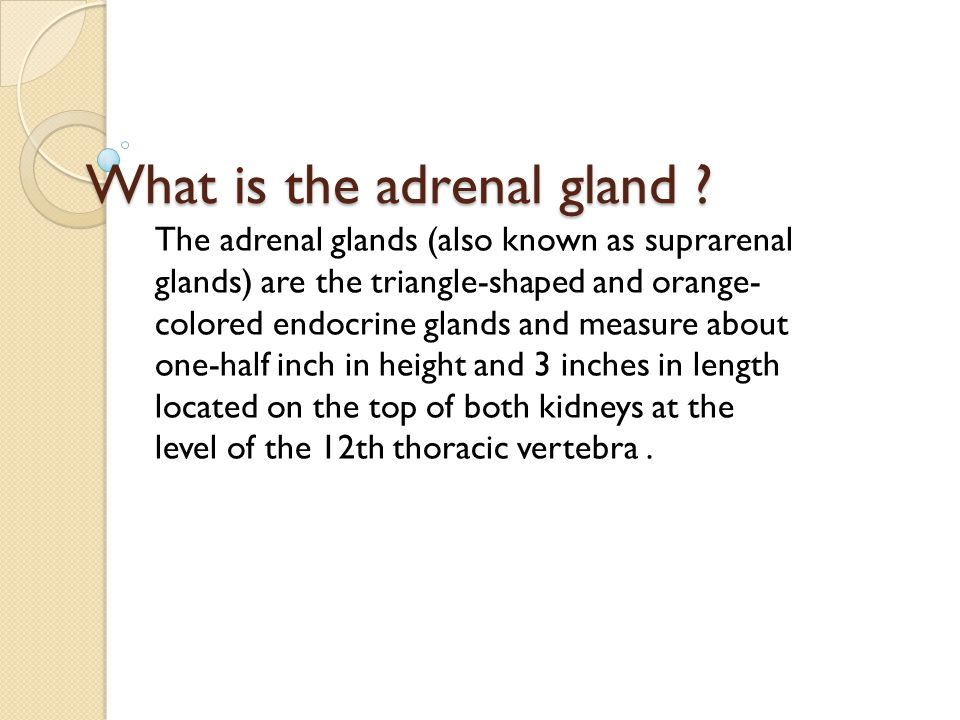 What is the adrenal gland The adrenal glands (also known as suprarenal glands) are the triangle-shaped and orange- colored endocrine glands and measure about one-half inch in height and 3 inches in length located on the top of both kidneys at the level of the 12th thoracic vertebra.