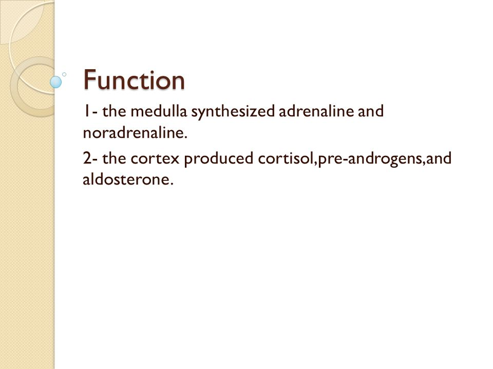 Function 1- the medulla synthesized adrenaline and noradrenaline.