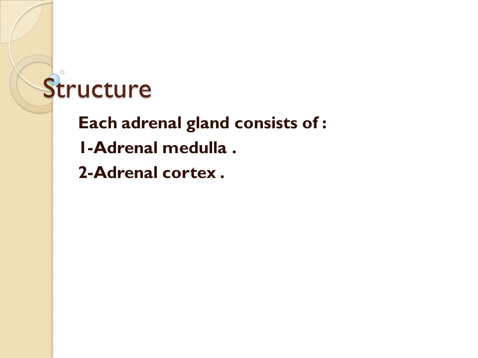 Structure Each adrenal gland consists of : 1-Adrenal medulla. 2-Adrenal cortex.