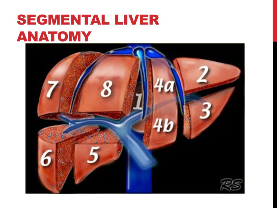 IMAGING ANATOMY OF THE LIVER FLIP OTTO DEPT. OF RADIOLOGY ...