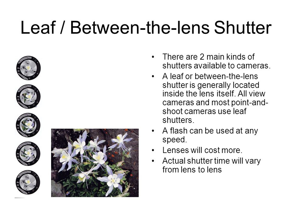 Leaf / Between-the-lens Shutter There are 2 main kinds of shutters available to cameras.