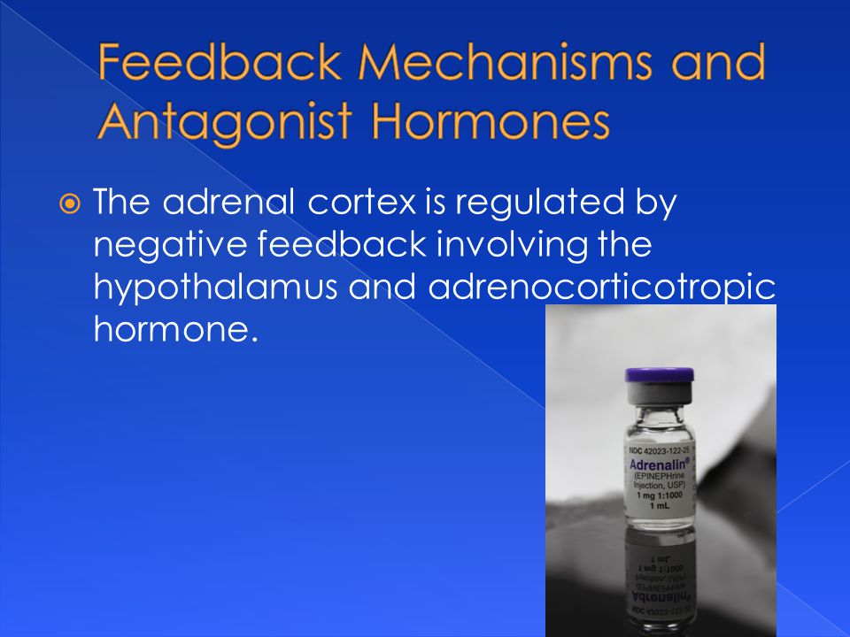  The adrenal cortex is regulated by negative feedback involving the hypothalamus and adrenocorticotropic hormone.