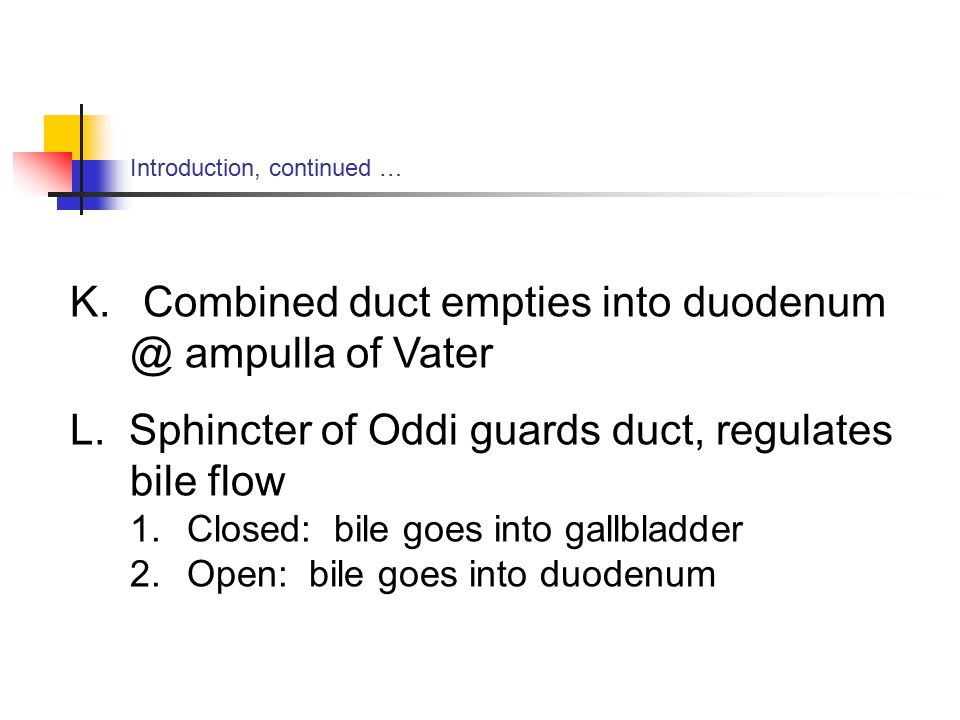 Introduction, continued … K. Combined duct empties into ampulla of Vater L.