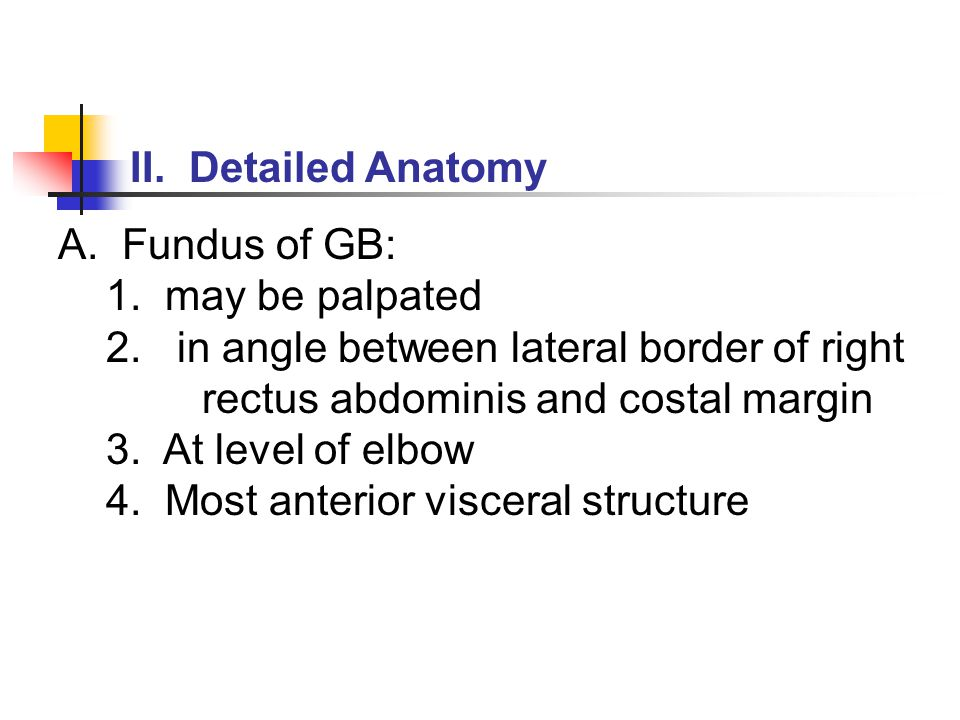II. Detailed Anatomy A. Fundus of GB: 1. may be palpated 2.