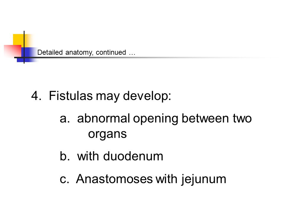 Detailed anatomy, continued … 4. Fistulas may develop: a.