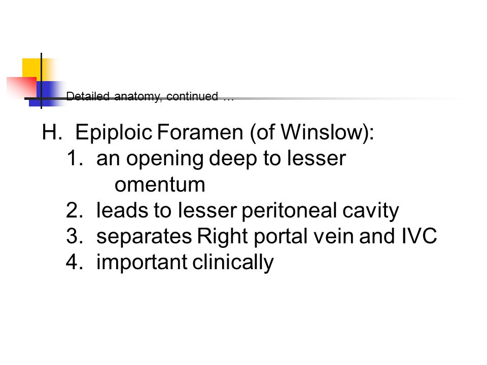 Detailed anatomy, continued … H. Epiploic Foramen (of Winslow): 1.