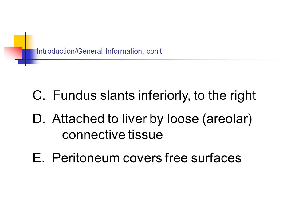 Introduction/General Information, con't. C. Fundus slants inferiorly, to the right D.