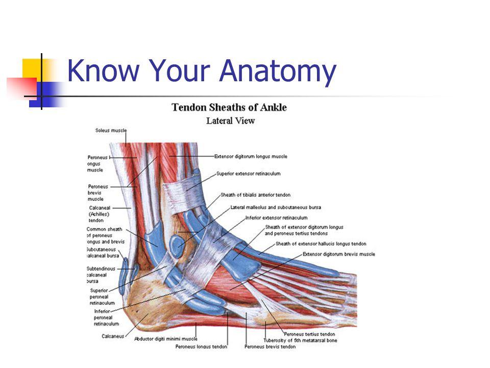 Chronic Ankle Pain David B Glover Dpm Facfas Chronic Ankle Pain