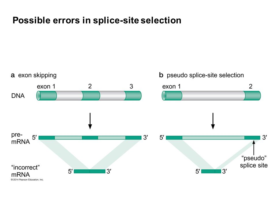 Possible errors in splice-site selection