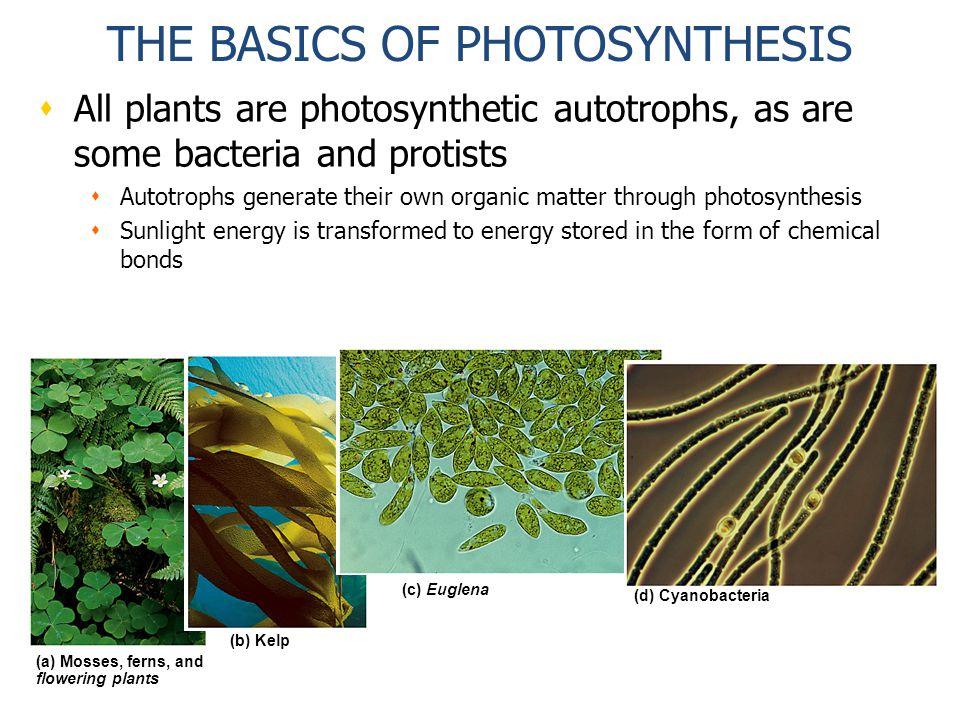Photosynthesis Autotroph vs. Heterotroph Autotroph- organism that ...