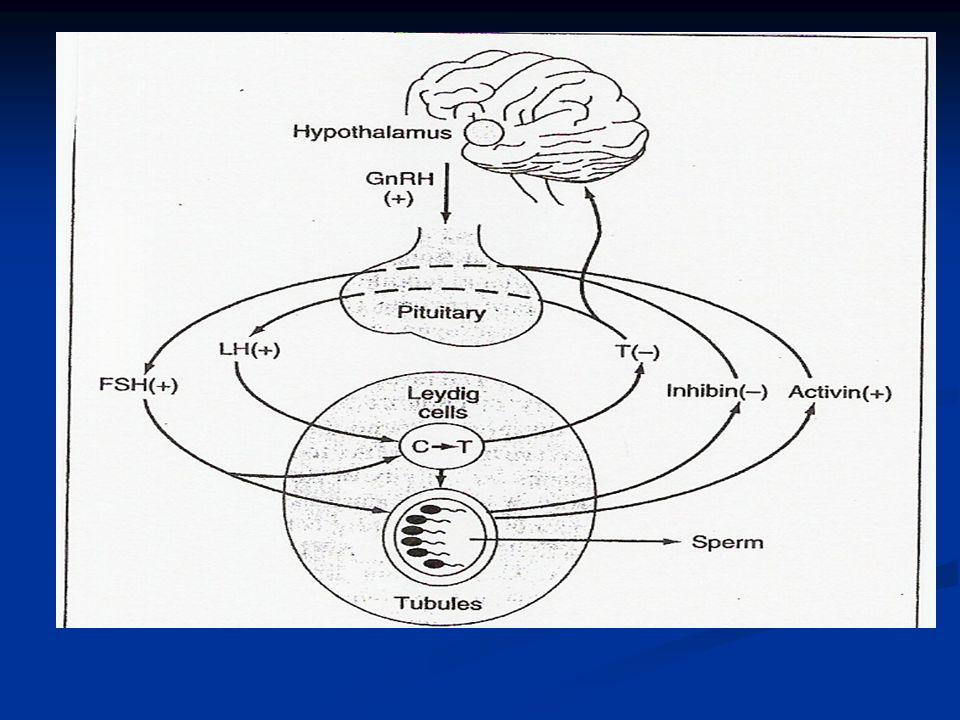 Treatment Of The Hypogonadal Male William Abeyta Md Associate