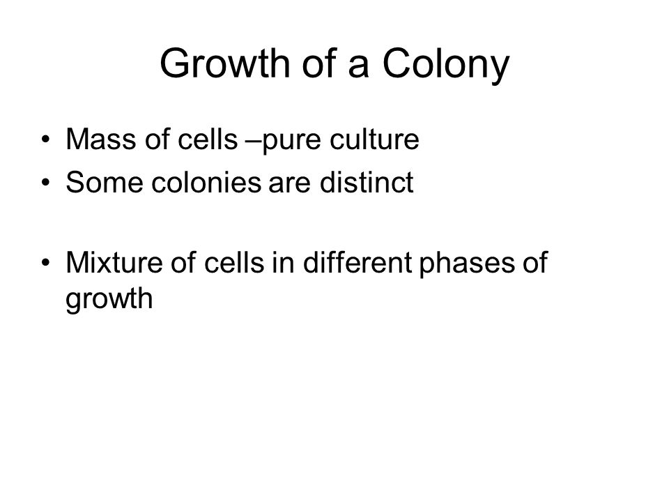 Growth of a Colony Mass of cells –pure culture Some colonies are distinct Mixture of cells in different phases of growth