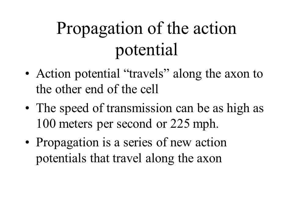 Propagation of the action potential Action potential travels along the axon to the other end of the cell The speed of transmission can be as high as 100 meters per second or 225 mph.